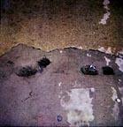 footprintsS.jpg